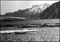 Bear Glacier 1909 Backcountry Safaris